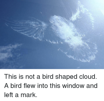 this-is-not-a-bird-shaped-cloud-a-bird-flew-10385434.png